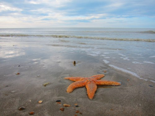 Norman's Bay Starfish