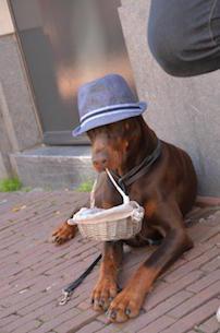 564-dog-927246