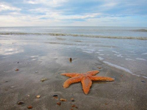 Norman's Bay Starfish